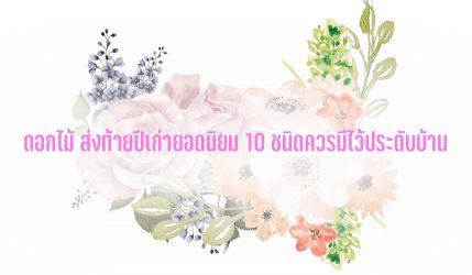 ดอกไม้ ยอดนิยมที่ผู้คนมักซื้อมาไว้ประดับที่บ้าน